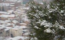 Снег на деревьях в центре грузинской столицы