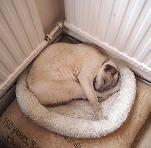 გათბობის რადიატორთან მოკალათებული კატა