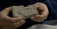 Каменные яйца: кадры древней находки в Китае, которой около 120 млн лет