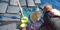 Спасение черепахи, застрявшей среди тюков с кокаином
