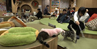 Кошачье кафе в Японии помогает снять стресс его посетителям
