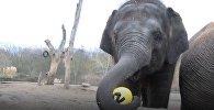 Слоненок Эдгар в берлинском зоопарке отпраздновал двухлетие