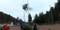 Чемпионат по метанию елок прошел в немецком Вайдентале