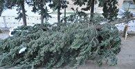 Дерево упало на машину в районе Надзаладеви в Тбилиси