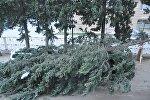 Дерево упало на машину в районе Надзаладеви в столице Грузии