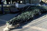 Телави остался без новогодней елки: последствия урагана