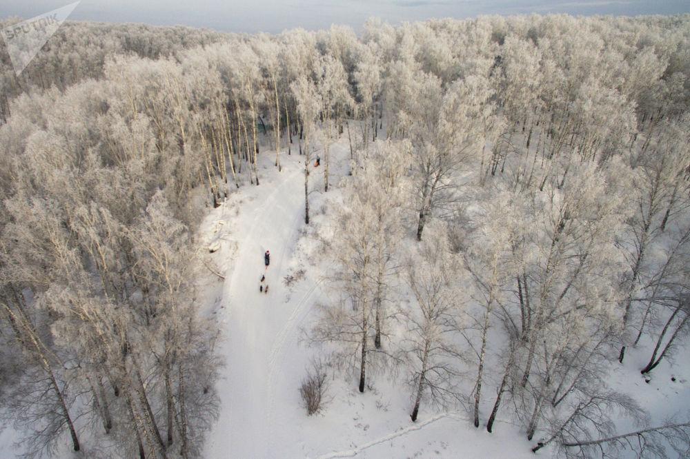 Участники соревнований прокатились на собачьих упряжках по сложной трассе с крутыми подъемами и спусками