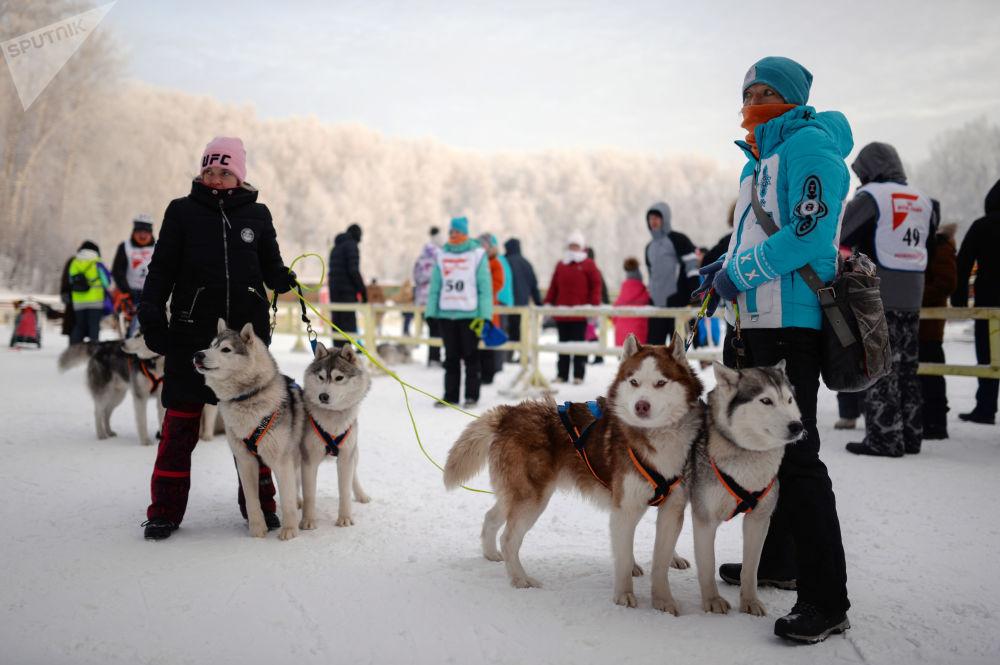 Гонки на собачьих упряжках были организованы на базе биатлонного комплекса Новосибирска