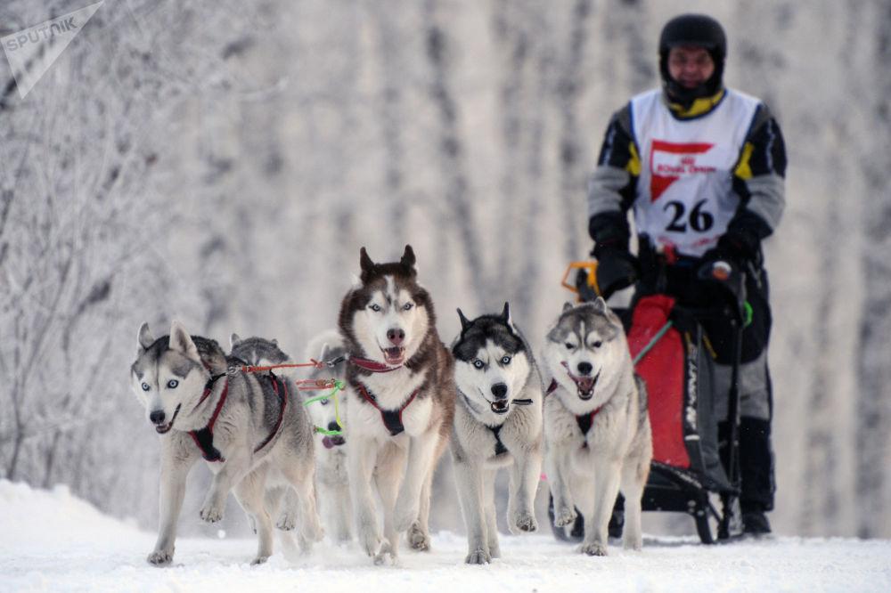 Основной состав участников соревнований приезжает на гонки из Омска, Томска, Красноярска и Горно-Алтайска