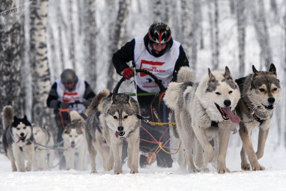 Соревнования проходили в четырех дисциплинах: нарта-спринт, ски-джоринг, хэппи дог и детские старты
