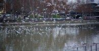 Чайки над Курой на тбилисской набережной