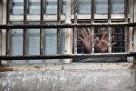 Заключенный протягивает руки сквозь решетку камеры в тюрьме