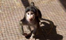 მაიმუნი ბათუმის ზოოკუთხეში