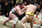 Грузинский сумоист Леван Горгадзе (Тотиносин) стал победителем турнира на Кубок императора