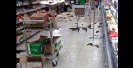 В гипермаркете Карфур разбился аквариум с рыбой - кадры очевидца