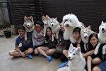 Кафе с собаками в Бангкоке: как выглядит необычное заведение