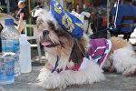 Собачий карнавал в Рио-де-Жанейро: как прошел парад любимцев