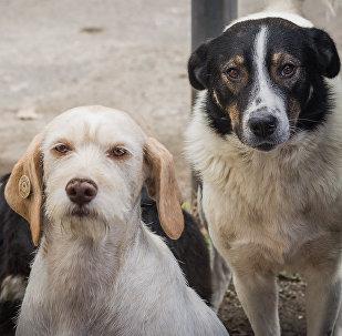 Собаки, за которыми присматривает Павел Джураев