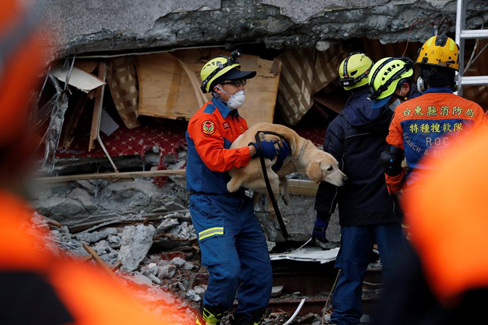 Спасатели после землетрясения помогали не только людям, но и домашним животным