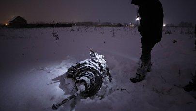 Следователь изучает обломки Ан-148 после крушения в Подмосковье