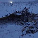 Самолет Ан-148 Саратовских авиалиний Москва — Орск разбился в воскресенье через несколько минут после взлета из Домодедово