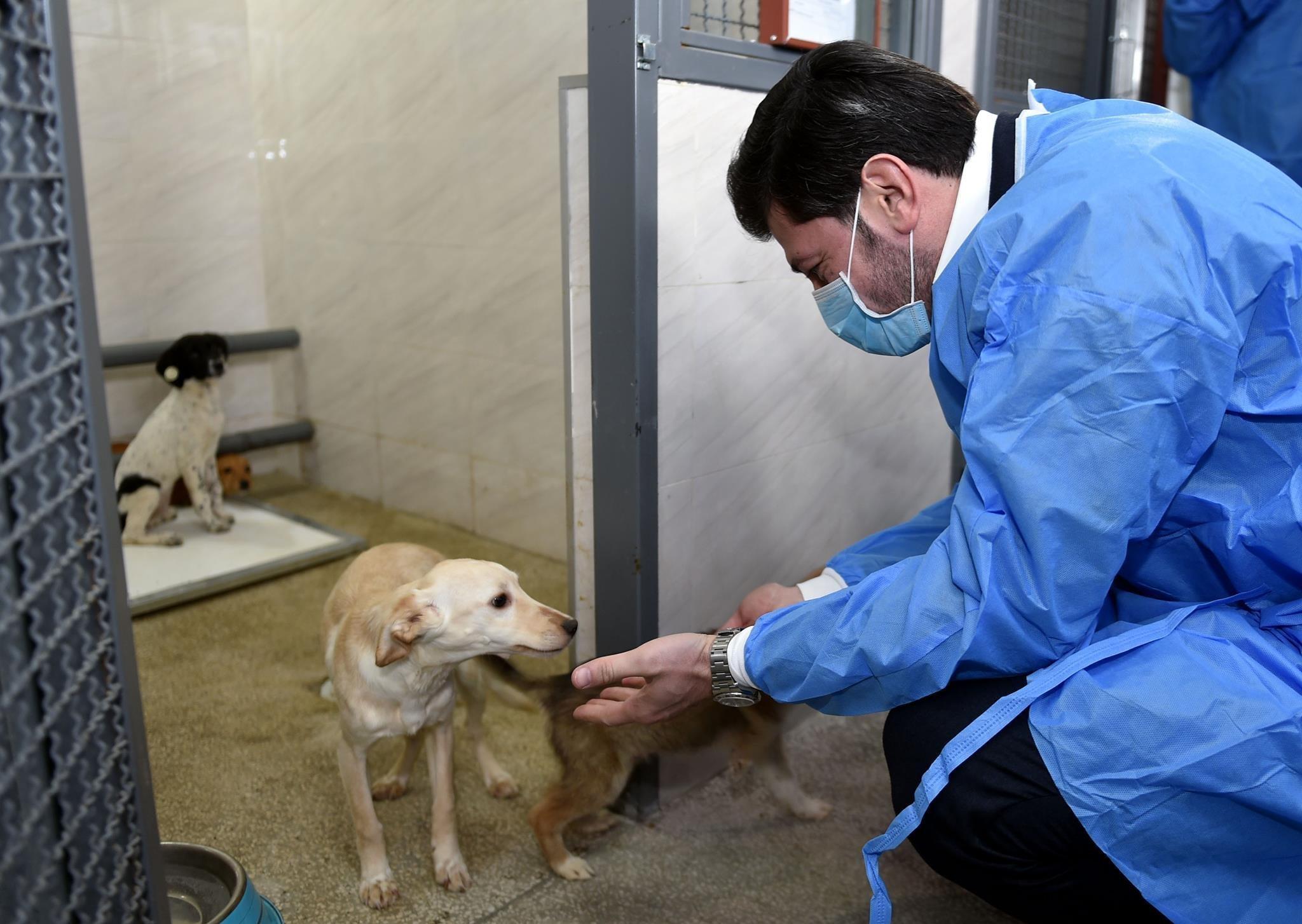 Каха Каладзе в приюте Агентства по мониторингу животных