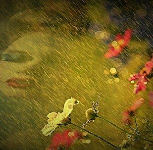 ქალი ყვავილებში
