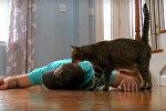 Хозяин, очнись: как кошка пыталась спасти своего владельца