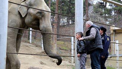 Давид Нозадзе в зоопарке