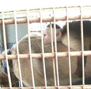Как собака усыновила обезьянку