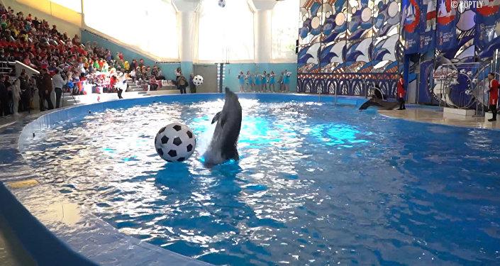 Футбольное шоу в дельфинарии