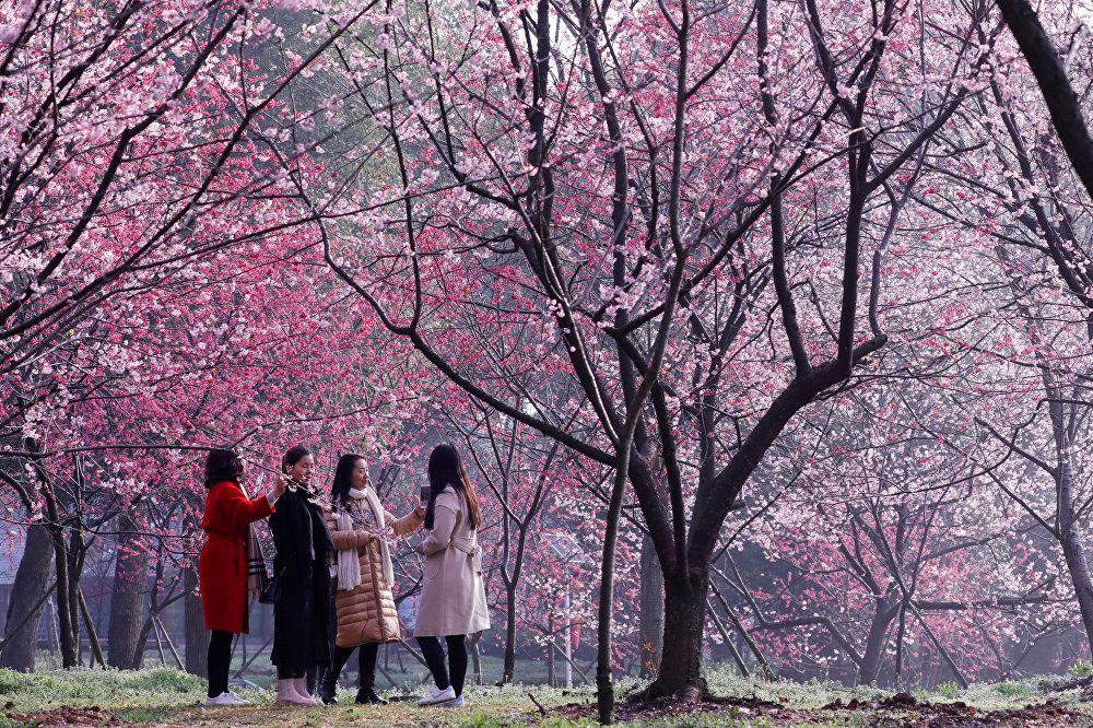 Девушки гуляют в парке под цветущими цветами вишни в вишневой роще на Восточном озере в Ухане, провинция Хубэй, Китай