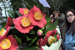 Цветы весны: выставка камелий состоялась в Батуми
