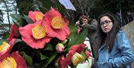გაზაფხულის ყვავილები: ბათუმში კამელიების გამოფენა გაიმართა