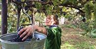 Съемки документального полнометражного фильма Наша кровь – это вино